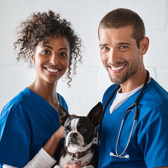 Two veterinarians holding a dog